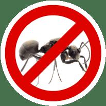 exterminateur-fourmis
